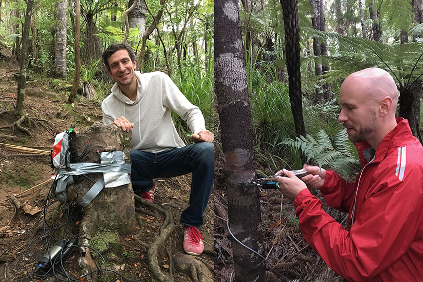 Sebastian Leuzinger and Martin Bader doing research with kauri trees