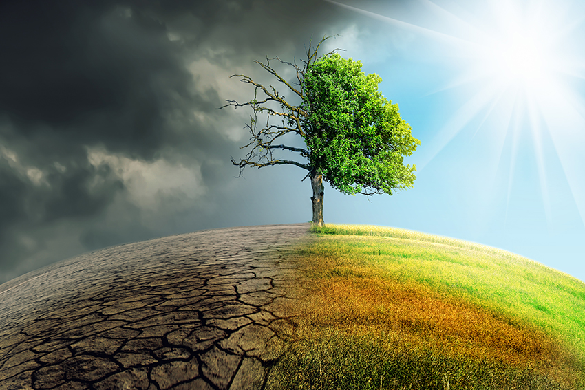 Illustration of a tree in a field with one half affected by climate change and the other healthy and green.