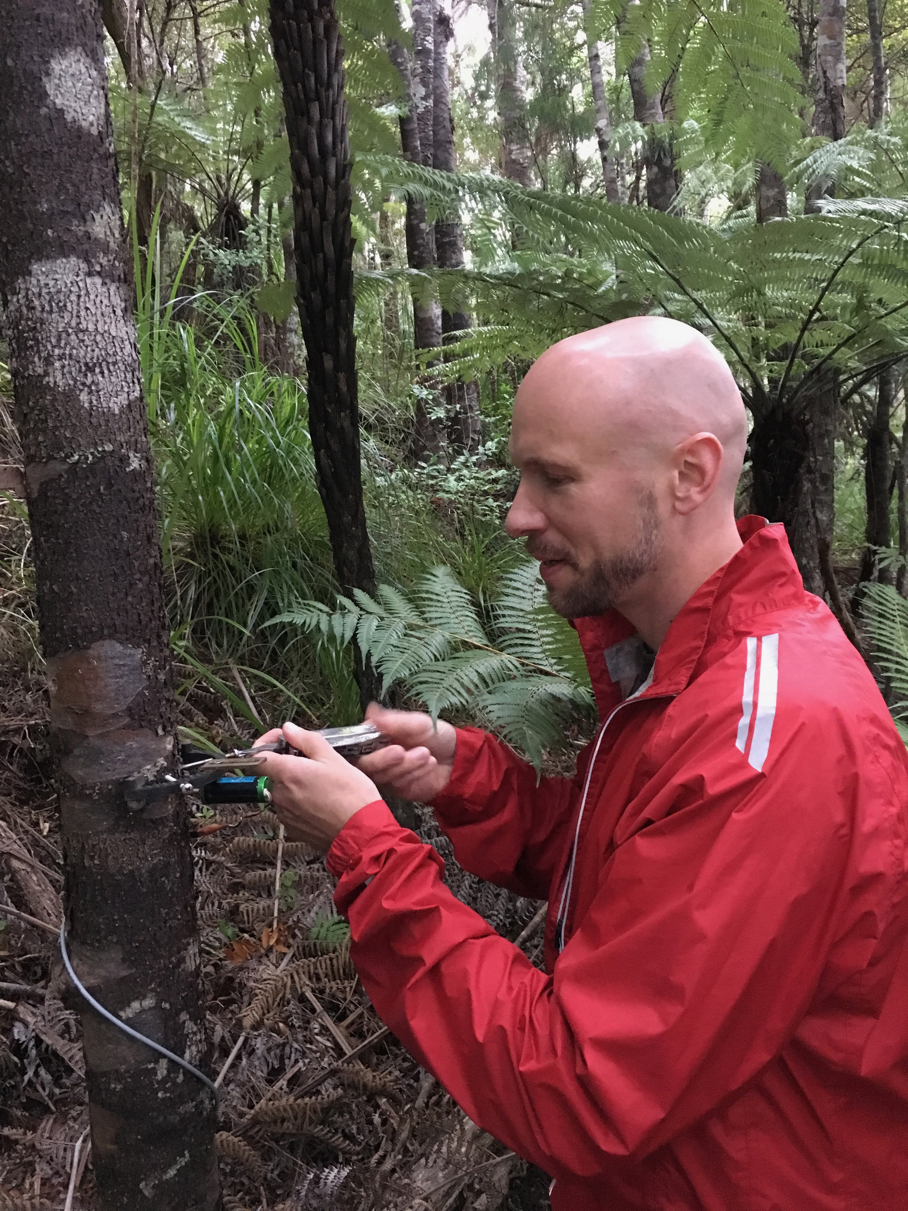 Martin Bader with young kauri tree