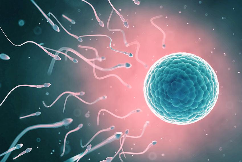 the fertility scene in NZ