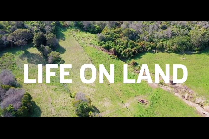 Life on land