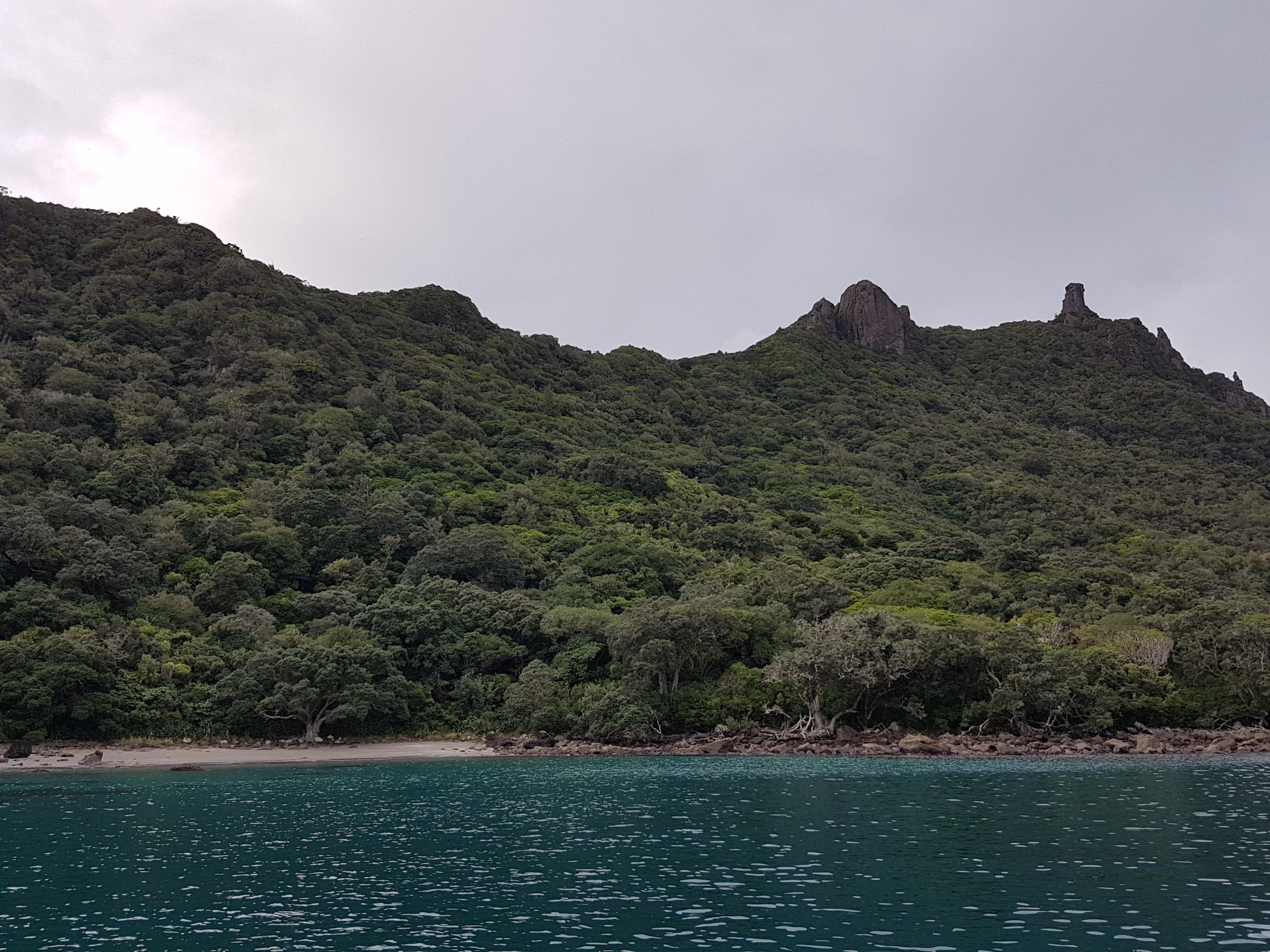 Bream Head Scenic Reserve