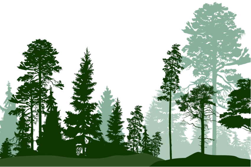 Silhoutte drawings of trees making a forest.