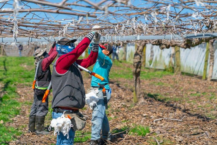 Seasonal workers in the field